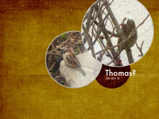 scrapbook image includes two close-up photos of male house sparrow from behind, one in which he has turned to look at the camera; and the words 'Thomas? 03-03-12'