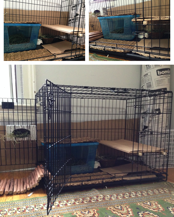 Three photos of a large dog crate tricked out with a jumping shelf, litter box, grass mats, cardboard mats, water bottle, water bowl, and hay bowl
